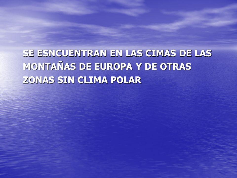 SE ESNCUENTRAN EN LAS CIMAS DE LAS MONTAÑAS DE EUROPA Y DE OTRAS ZONAS SIN CLIMA POLAR