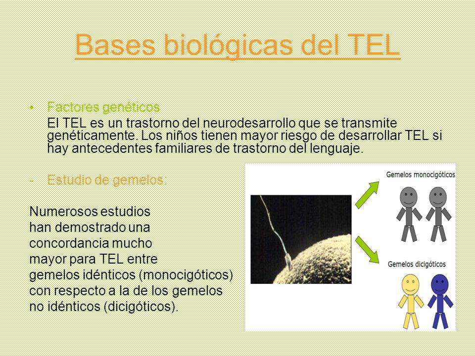 Bases biológicas del TEL Factores genéticos El TEL es un trastorno del neurodesarrollo que se transmite genéticamente. Los niños tienen mayor riesgo d