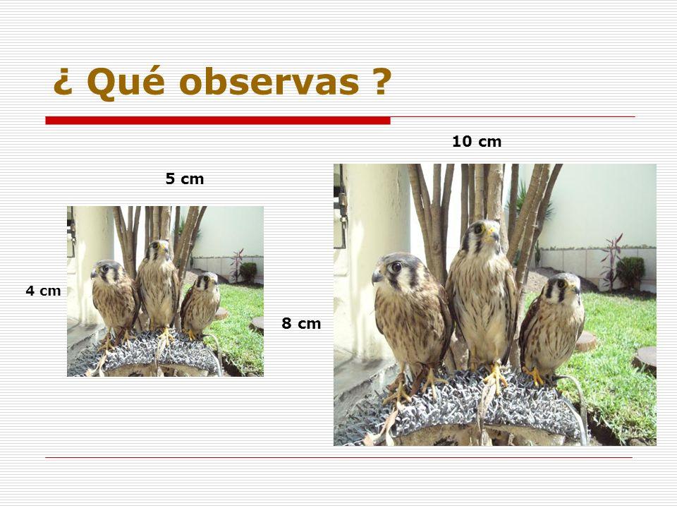 ¿ Qué observas ? 10 cm 5 cm 4 cm 8 cm