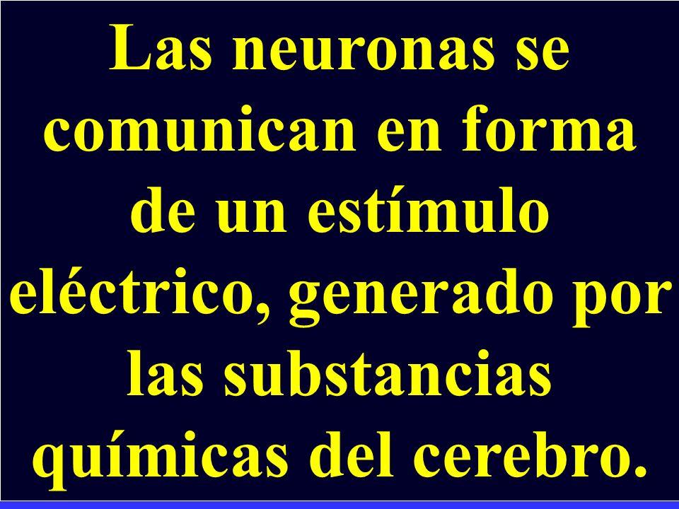 LA COMUNICACIÓN ENTRE NEURONAS Las Neuronas se comunican por medio de neurotransmisores (que forman el cableado electroquímico.)