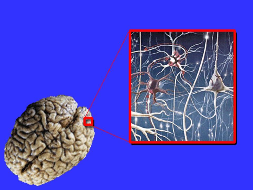El componente ambiente Los neurotransmisores, generados por un buen ambiente, favorecen el aprendizaje.