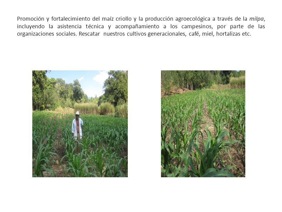 Promoción y fortalecimiento del maíz criollo y la producción agroecológica a través de la milpa, incluyendo la asistencia técnica y acompañamiento a los campesinos, por parte de las organizaciones sociales.