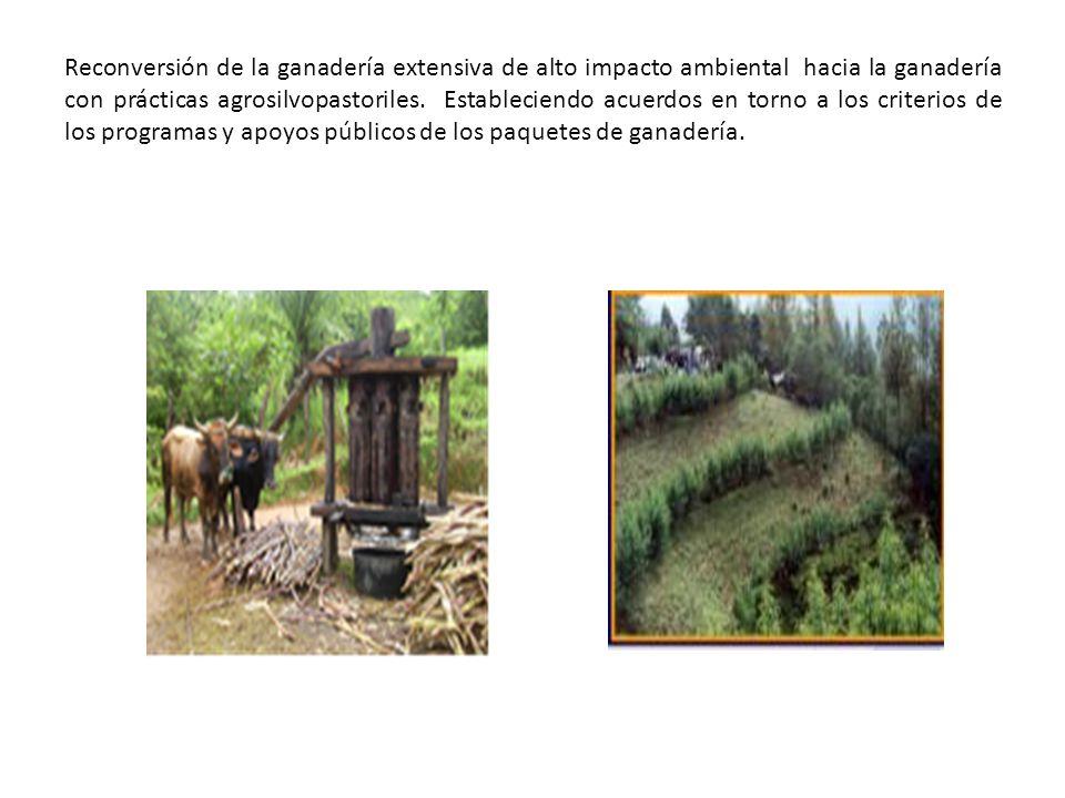 Inventario forestal actualizado y confiable en cada municipio, accesible para los ayuntamientos, las organizaciones sociales y las comunidades.
