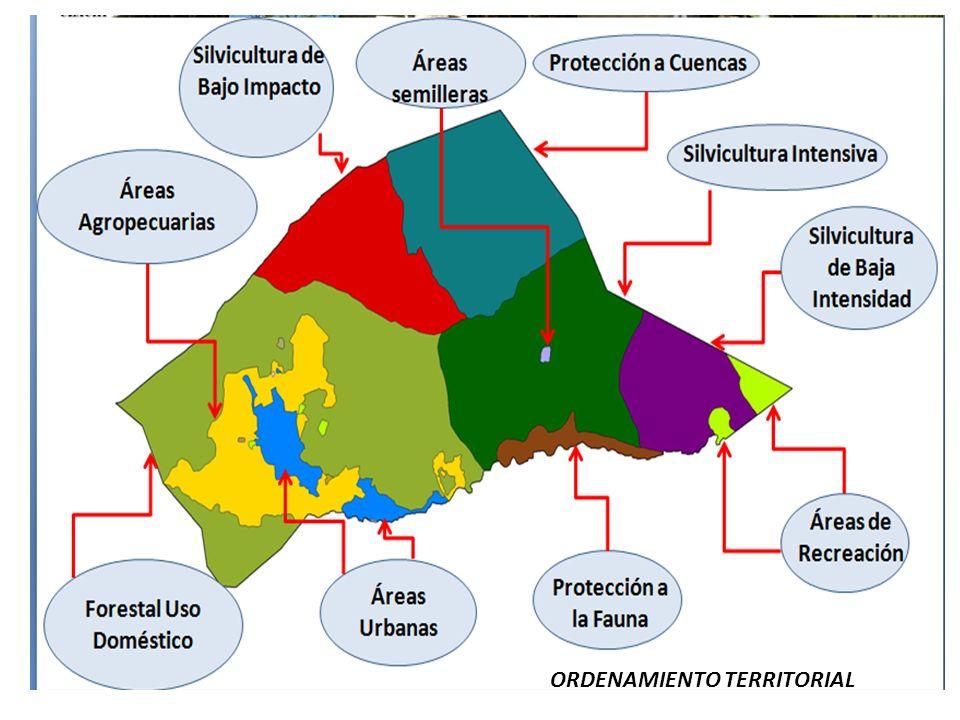 CONCEPTOS I.ÁREAS DE PRODUCCIÓN FORESTAL Silvicultura Intensiva.