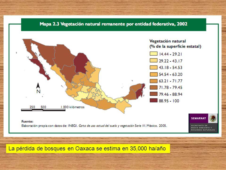La pérdida de bosques en Oaxaca se estima en 35,000 ha/año