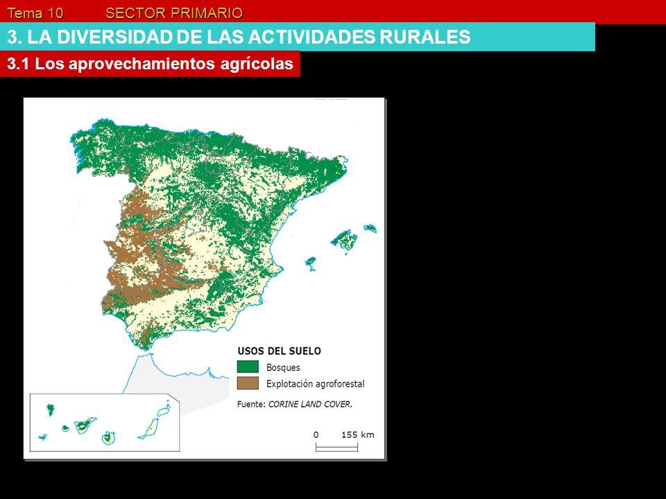 Tema 10 SECTOR PRIMARIO 3. LA DIVERSIDAD DE LAS ACTIVIDADES RURALES 3.1 Los aprovechamientos agrícolas
