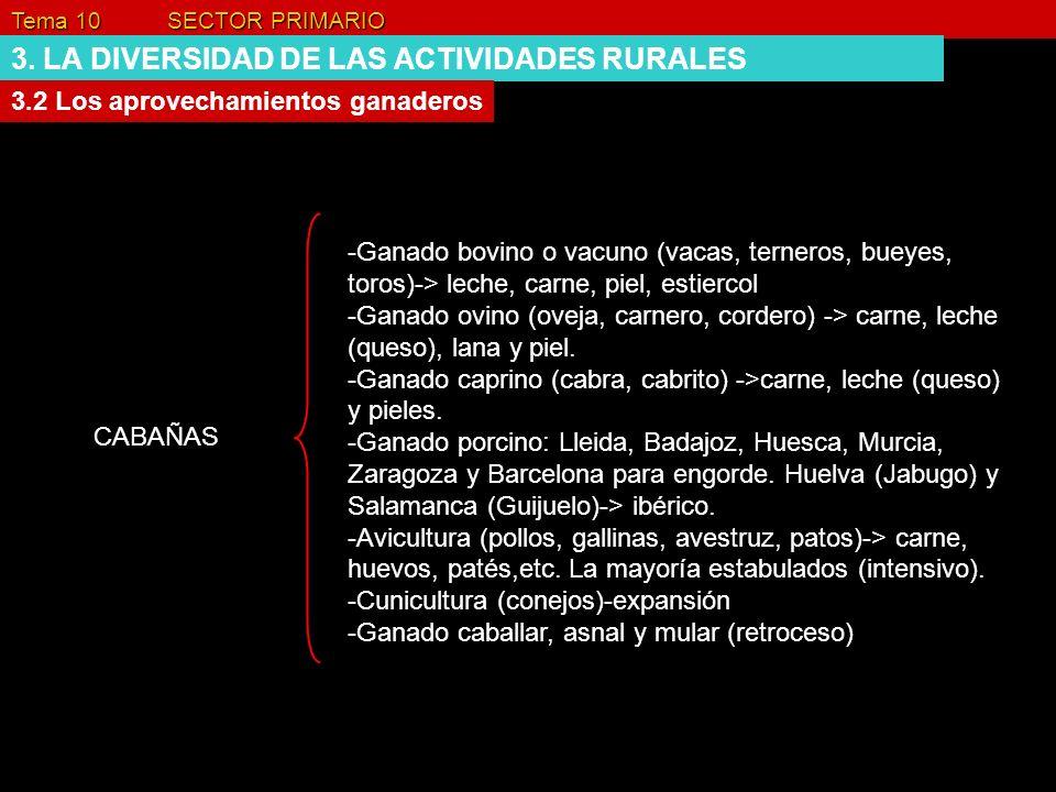 Tema 10 SECTOR PRIMARIO 3. LA DIVERSIDAD DE LAS ACTIVIDADES RURALES 3.2 Los aprovechamientos ganaderos CABAÑAS -Ganado bovino o vacuno (vacas, ternero