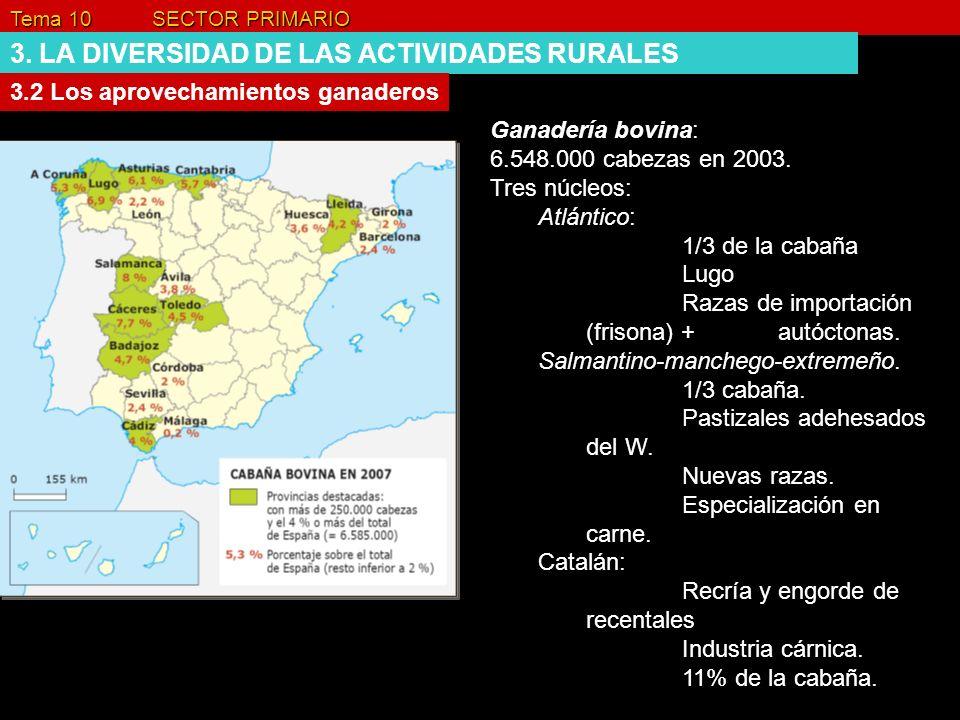 Tema 10 SECTOR PRIMARIO 3. LA DIVERSIDAD DE LAS ACTIVIDADES RURALES 3.2 Los aprovechamientos ganaderos Ganadería bovina: 6.548.000 cabezas en 2003. Tr