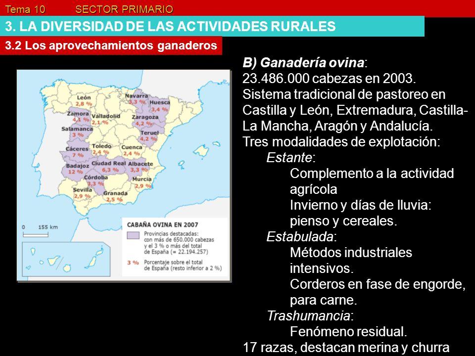 Tema 10 SECTOR PRIMARIO 3. LA DIVERSIDAD DE LAS ACTIVIDADES RURALES 3.2 Los aprovechamientos ganaderos B) Ganadería ovina: 23.486.000 cabezas en 2003.