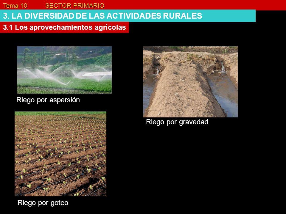 Tema 10 SECTOR PRIMARIO 3. LA DIVERSIDAD DE LAS ACTIVIDADES RURALES 3.1 Los aprovechamientos agrícolas Riego por aspersión Riego por gravedad Riego po