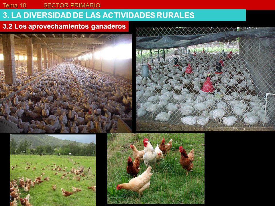 Tema 10 SECTOR PRIMARIO 3. LA DIVERSIDAD DE LAS ACTIVIDADES RURALES 3.2 Los aprovechamientos ganaderos