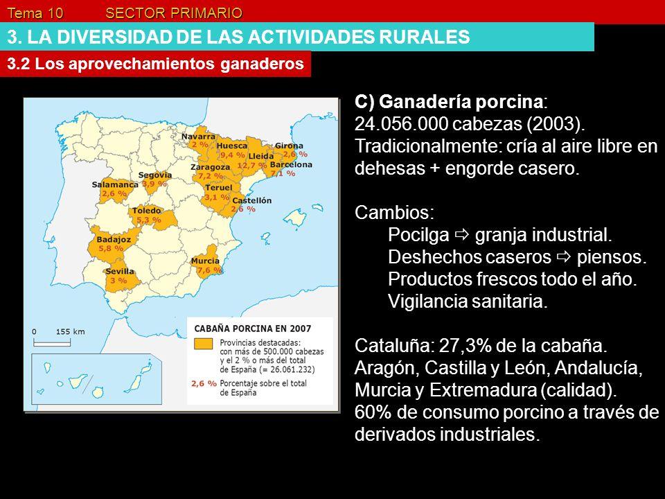 Tema 10 SECTOR PRIMARIO 3. LA DIVERSIDAD DE LAS ACTIVIDADES RURALES 3.2 Los aprovechamientos ganaderos C) Ganadería porcina: 24.056.000 cabezas (2003)