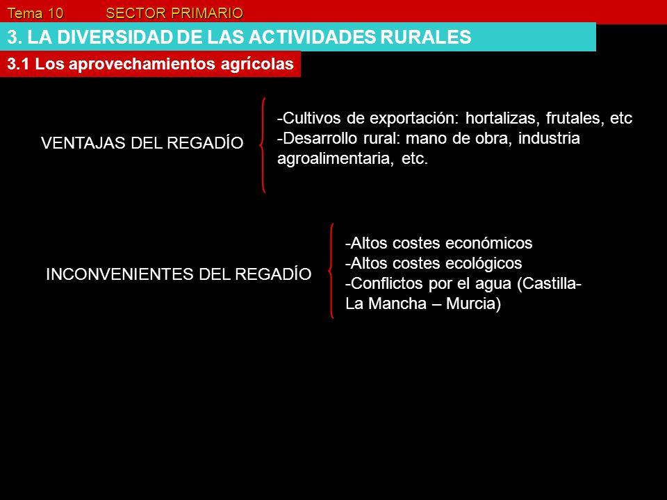 Tema 10 SECTOR PRIMARIO 3. LA DIVERSIDAD DE LAS ACTIVIDADES RURALES 3.1 Los aprovechamientos agrícolas VENTAJAS DEL REGADÍO -Cultivos de exportación:
