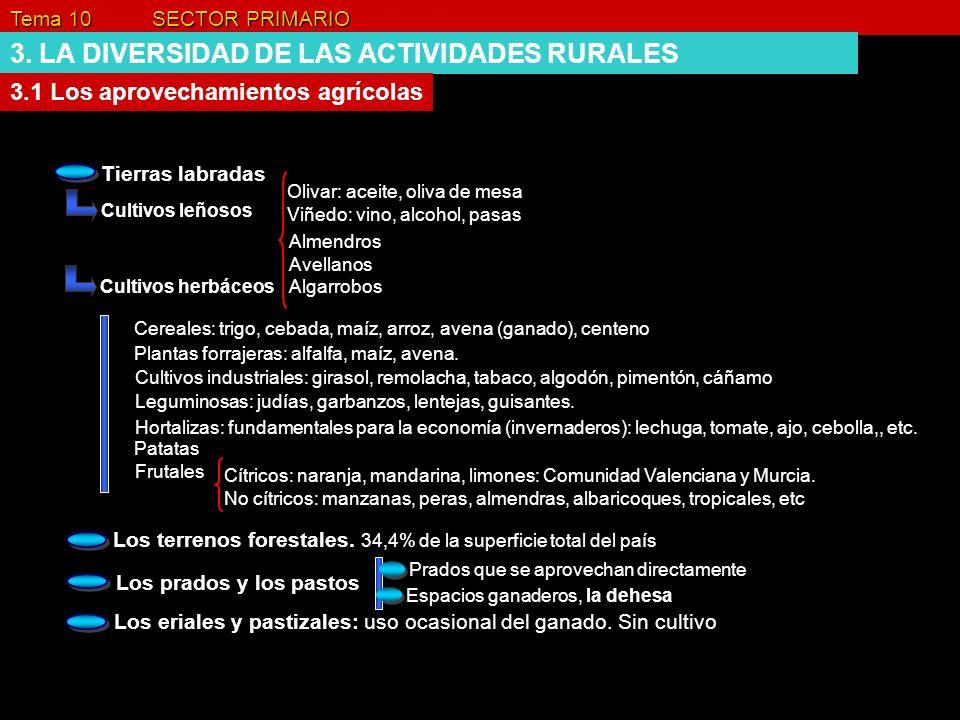 Tema 10 SECTOR PRIMARIO 3. LA DIVERSIDAD DE LAS ACTIVIDADES RURALES 3.1 Los aprovechamientos agrícolas Tierras labradas Cultivos leñosos Olivar: aceit