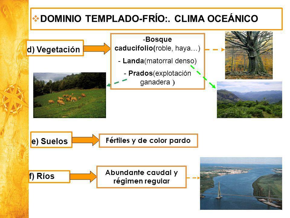 Historia y Ciencias Sociales Geografía DOMINIO TEMPLADO-FRÍO:. CLIMA OCEÁNICO d) Vegetación -Bosque caducifolio(roble, haya…) - Landa(matorral denso)