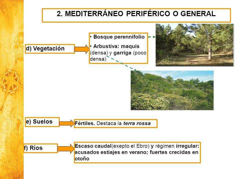 Historia y Ciencias Sociales Geografía 2. MEDITERRÁNEO PERIFÉRICO O GENERAL d) Vegetación Bosque perennifolio Arbustiva: maquis (densa) y garriga (poc