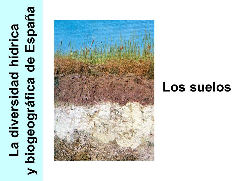 - Diversidad hídrica y biogeográfica - El suelo Terra fusca