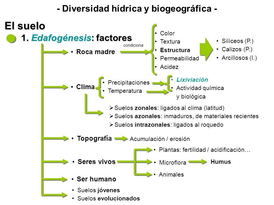 - Diversidad hídrica y biogeográfica - El suelo 1. Edafogénesis