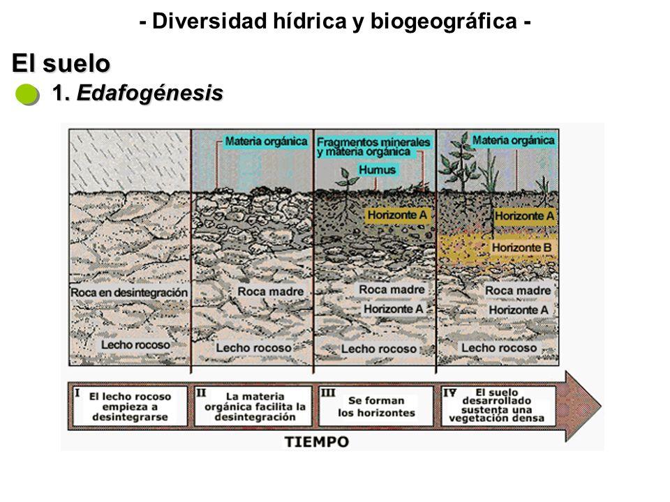 El suelo 2. Horizontes y perfil del suelo Perfil: conjunto de horizontes