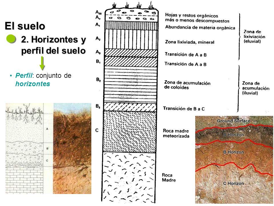 - Diversidad hídrica y biogeográfica - El suelo