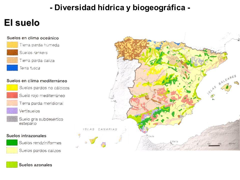 Lixiviación Roquedo silíceo Especies vegetales - Diversidad hídrica y biogeográfica - El suelo 3.