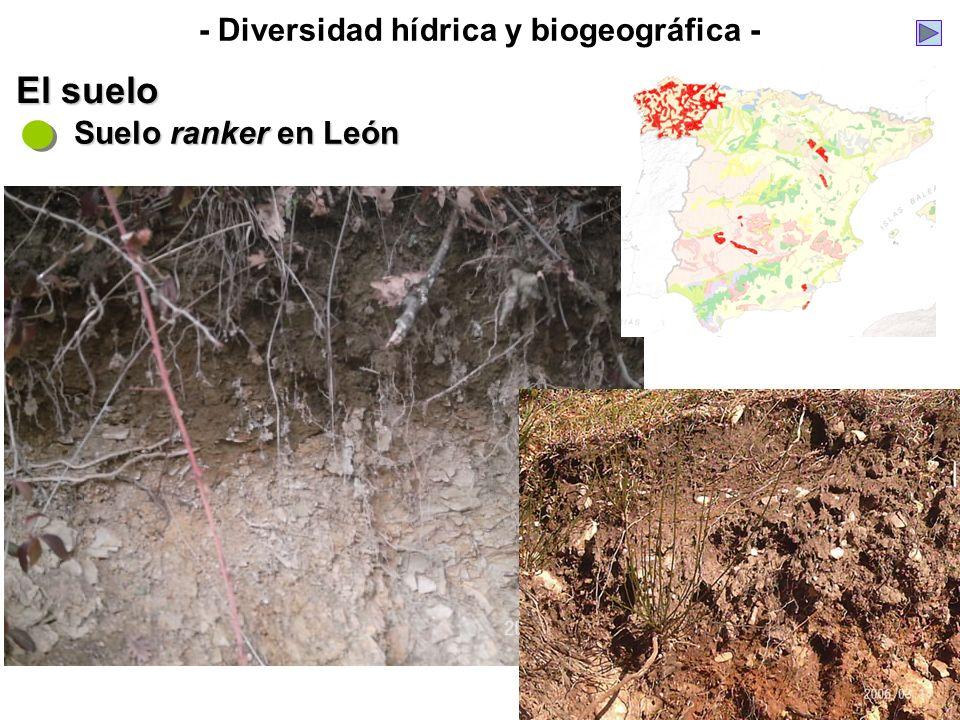 - Diversidad hídrica y biogeográfica - El suelo Suelo ranker