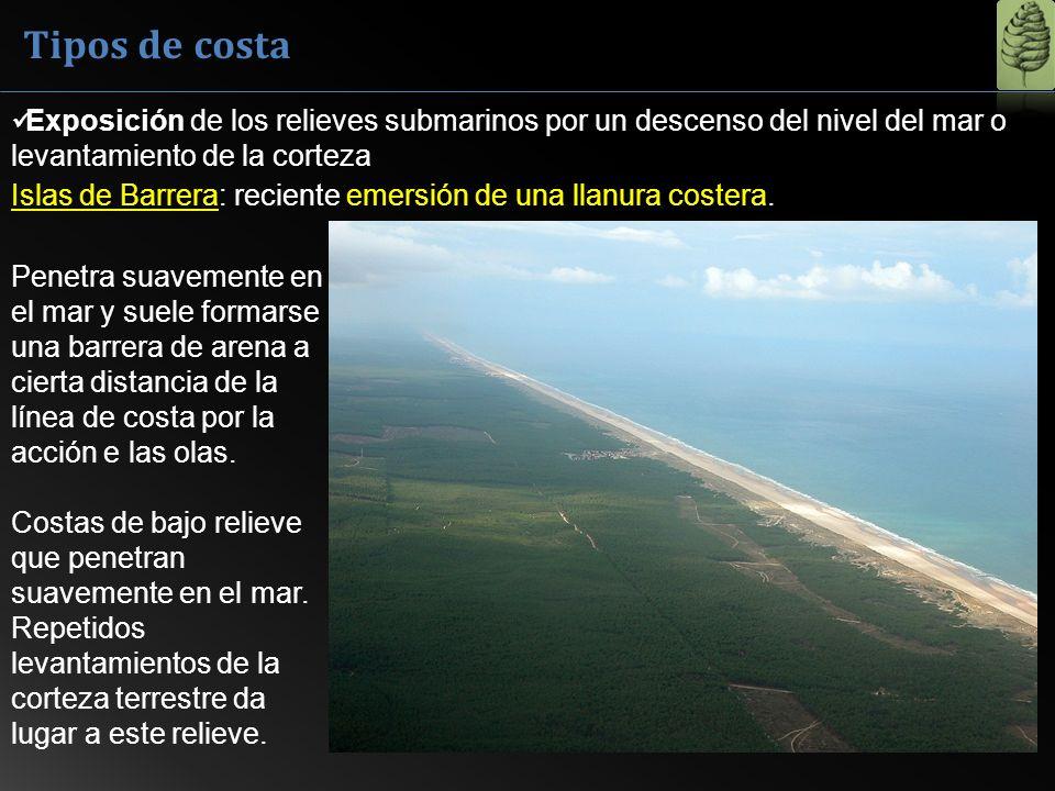 Penetra suavemente en el mar y suele formarse una barrera de arena a cierta distancia de la línea de costa por la acción e las olas. Costas de bajo re