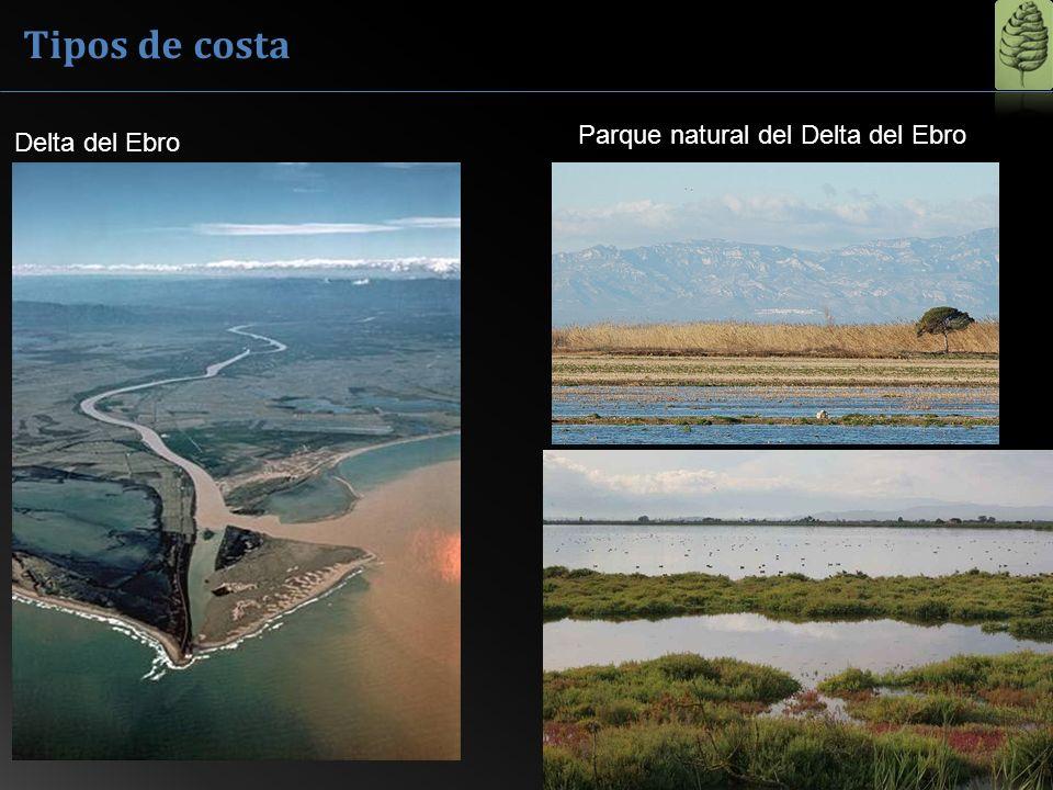 Delta del Ebro Parque natural del Delta del Ebro