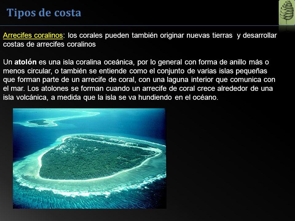Tipos de costa Arrecifes coralinos: los corales pueden también originar nuevas tierras y desarrollar costas de arrecifes coralinos Un atolón es una is