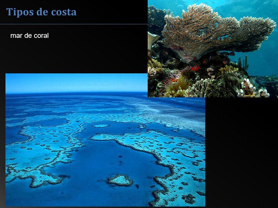 Tipos de costa mar de coral