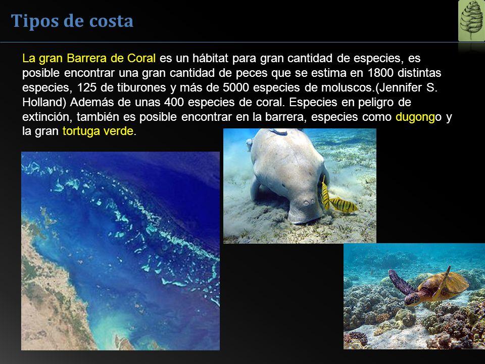 Tipos de costa La gran Barrera de Coral es un hábitat para gran cantidad de especies, es posible encontrar una gran cantidad de peces que se estima en