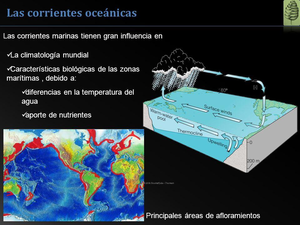 Las corrientes oceánicas La climatología mundial Características biológicas de las zonas marítimas, debido a: diferencias en la temperatura del agua a