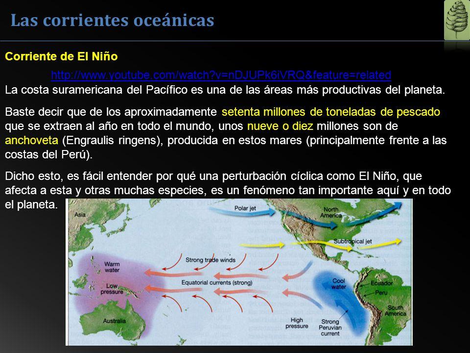 La costa suramericana del Pacífico es una de las áreas más productivas del planeta. Baste decir que de los aproximadamente setenta millones de tonelad