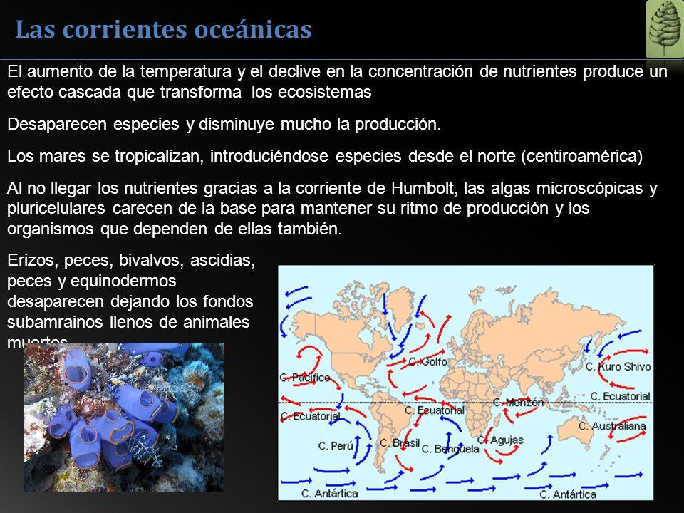 Las corrientes oceánicas El aumento de la temperatura y el declive en la concentración de nutrientes produce un efecto cascada que transforma los ecos