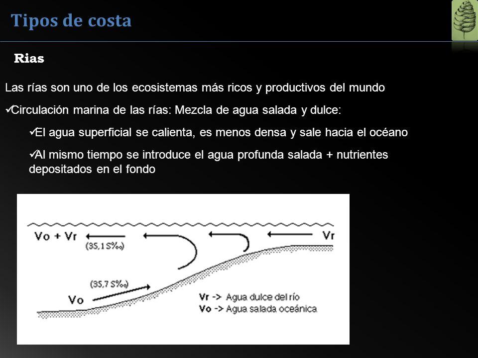 Tipos de costa Las rías son uno de los ecosistemas más ricos y productivos del mundo Circulación marina de las rías: Mezcla de agua salada y dulce: El