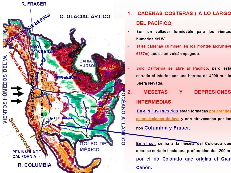 1. CADENAS COSTERAS ( A LO LARGO DEL PACÍFICO ) Son un valladar formidable para los vientos húmedos del W. Tales cadenas culminan en los montes McKinl