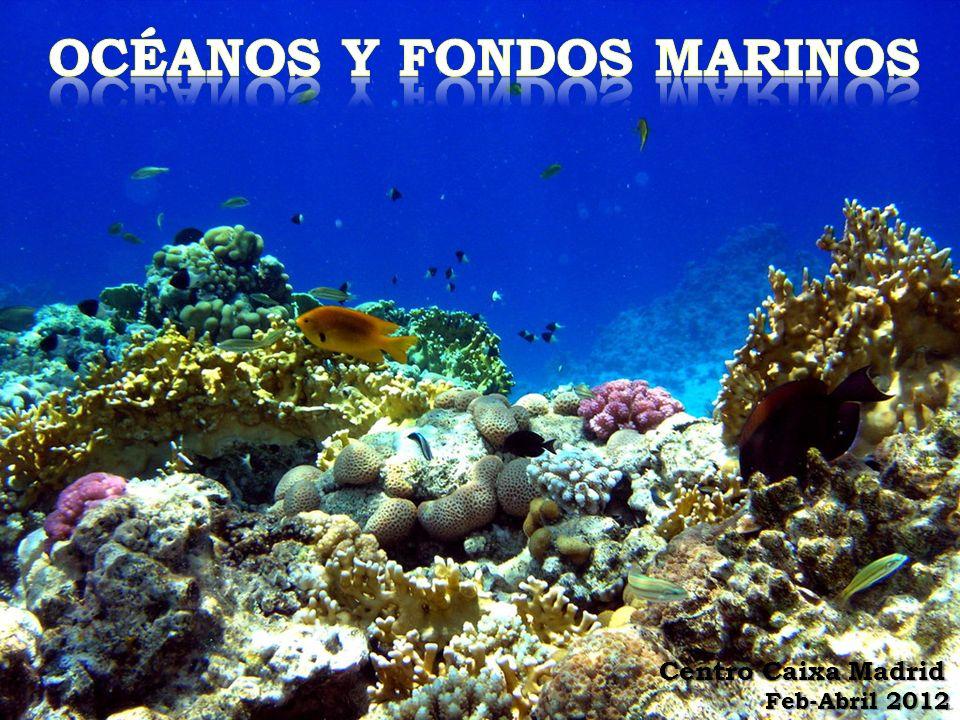 La vida en el océano El agua de mar es el hábitat más grande y homogéneo de la Tierra, recubriendo prácticamente el 71% de la superficie de dicho planeta.