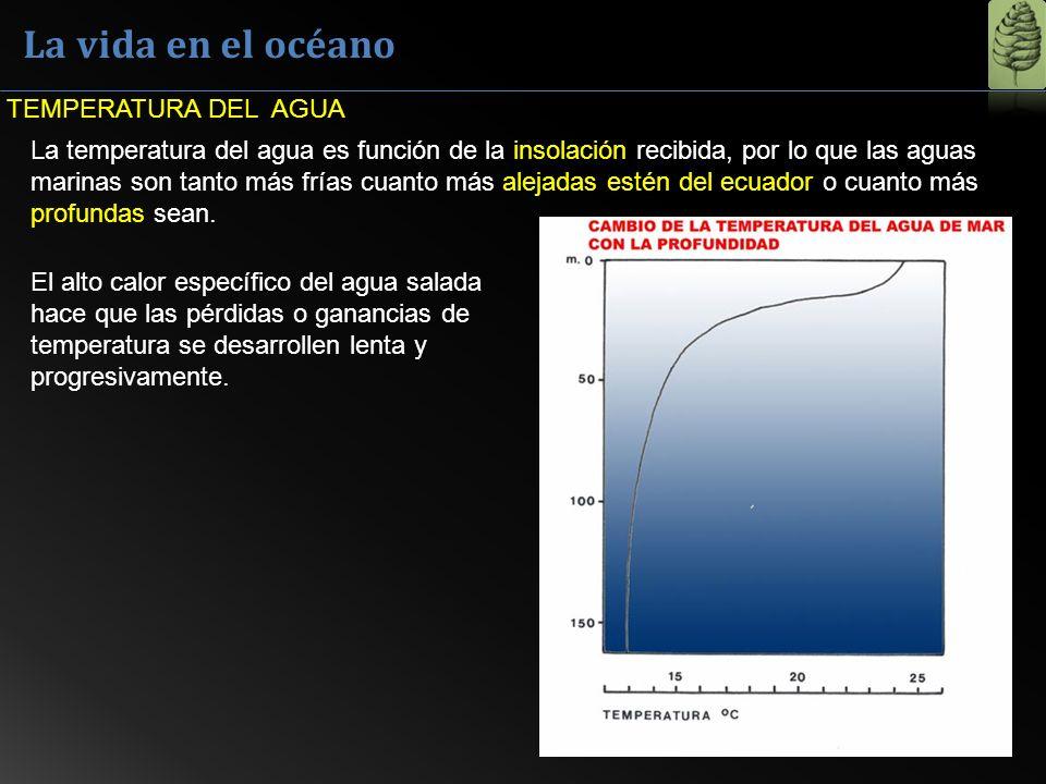 La vida en el océano TEMPERATURA DEL AGUA La temperatura del agua es función de la insolación recibida, por lo que las aguas marinas son tanto más frí