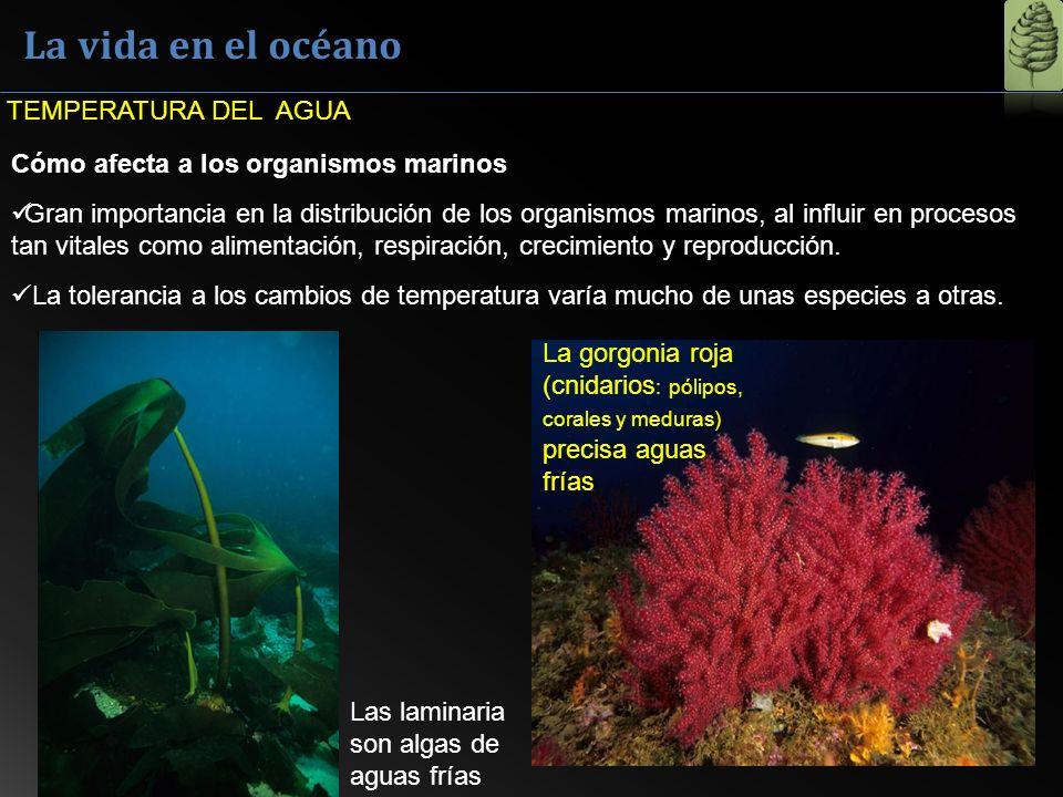 La vida en el océano Cómo afecta a los organismos marinos Gran importancia en la distribución de los organismos marinos, al influir en procesos tan vi