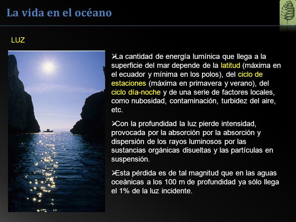 La vida en el océano LUZ La cantidad de energía lumínica que llega a la superficie del mar depende de la latitud (máxima en el ecuador y mínima en los