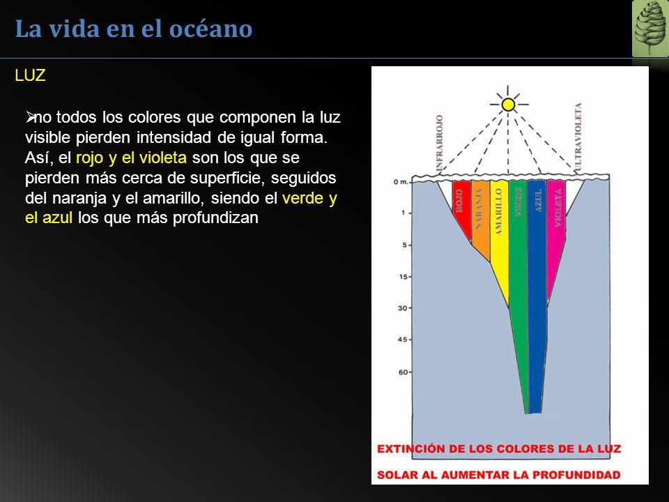 La vida en el océano no todos los colores que componen la luz visible pierden intensidad de igual forma. Así, el rojo y el violeta son los que se pier