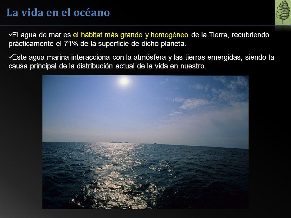 La vida en el océano El agua de mar es el hábitat más grande y homogéneo de la Tierra, recubriendo prácticamente el 71% de la superficie de dicho plan