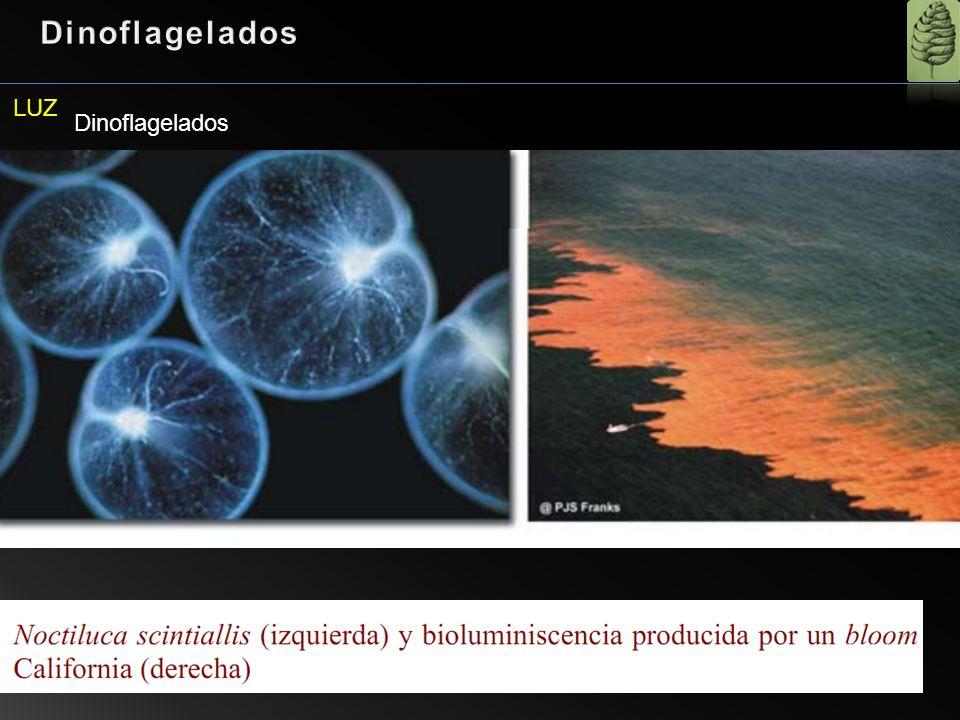 Dinoflagelados LUZ