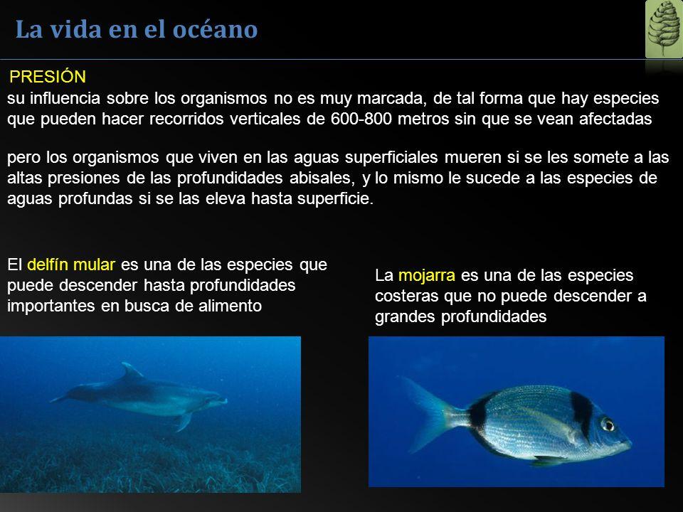 La vida en el océano su influencia sobre los organismos no es muy marcada, de tal forma que hay especies que pueden hacer recorridos verticales de 600