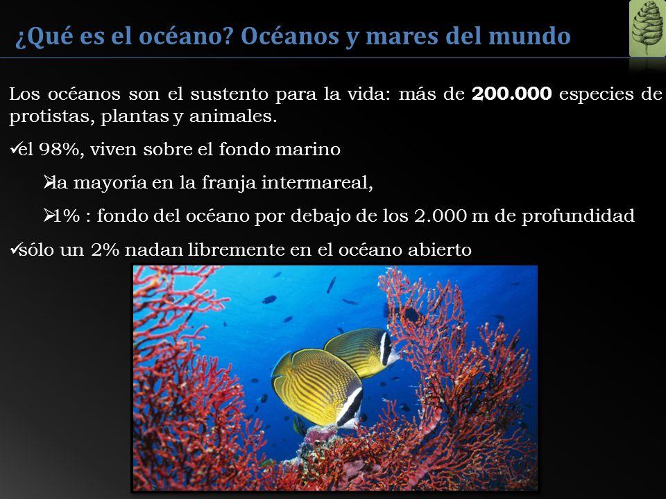 ¿Qué es el océano? Océanos y mares del mundo 200.000 Los océanos son el sustento para la vida: más de 200.000 especies de protistas, plantas y animale