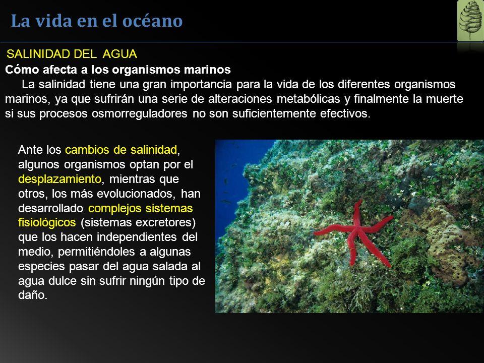 La vida en el océano Los mares más salados: Océanos: salinidad 3.5% Mar muerto: 33,7 % Lago Assal: entre el 34,8 y 40% Kara Bogaz Gol en Turkmenistán: 35% Laguna de Don Juan en la Antártida: superior al 40% SALINIDAD DEL AGUA