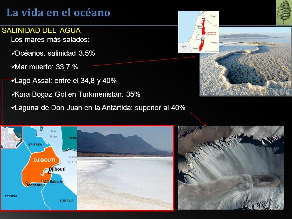 La vida en el océano Los mares más salados: Océanos: salinidad 3.5% Mar muerto: 33,7 % Lago Assal: entre el 34,8 y 40% Kara Bogaz Gol en Turkmenistán: