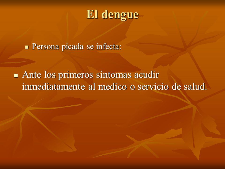El dengue Persona picada se infecta: Persona picada se infecta: Ante los primeros sintomas acudir inmediatamente al medico o servicio de salud. Ante l