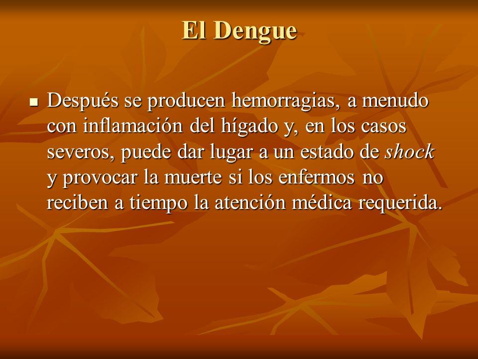 El Dengue Después se producen hemorragias, a menudo con inflamación del hígado y, en los casos severos, puede dar lugar a un estado de shock y provoca
