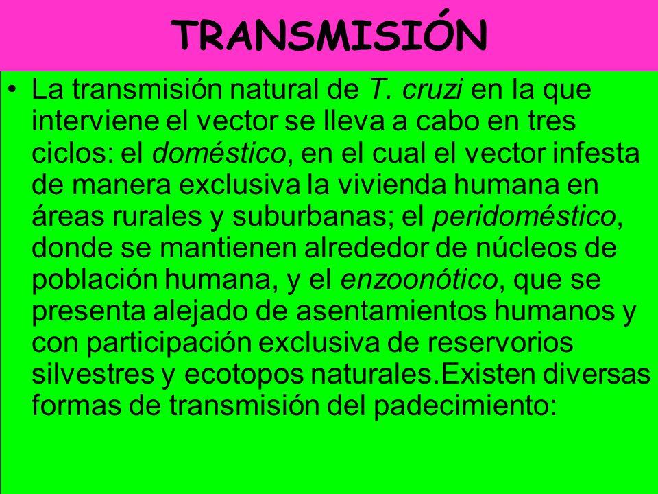 TRANSMISIÓN La transmisión natural de T. cruzi en la que interviene el vector se lleva a cabo en tres ciclos: el doméstico, en el cual el vector infes